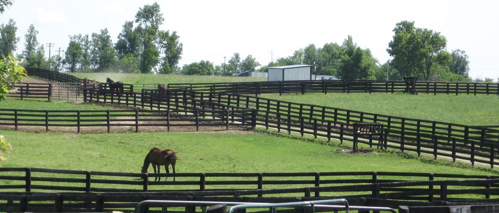 Horses-in-pastures