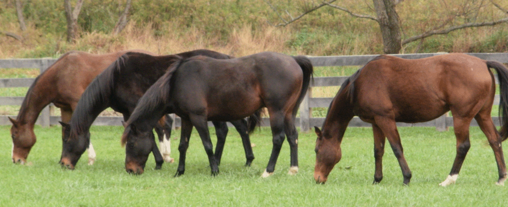 Central-Maryland-horses
