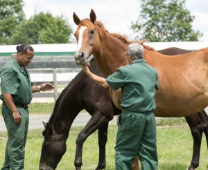Learning to become a leader of a herd of horses has been life changing for many inmates at the Wallkill Correctional Facility.