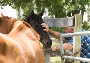 Tremper checks on one of the 53 Thoroughbreds under his care at the Wallkill Correctional Facility in NY.