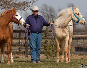 Dr. Reid McLellan with two horses