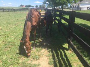 mare-foal-768x576