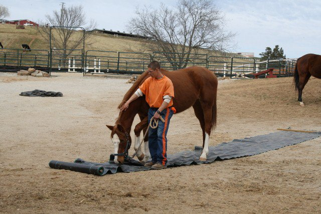 Horse and handler on obstacle course