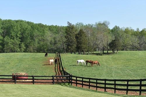 Montpelier grazing
