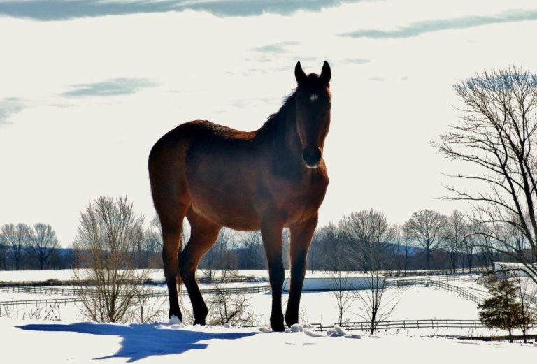 Snow Horse at Wallkill taken by prison staff- resized for Social Media